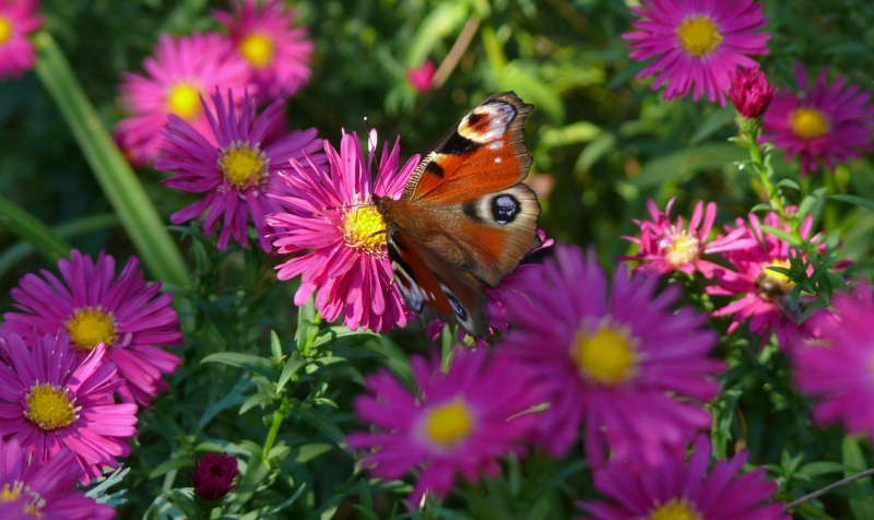 Best Of The Best 2006 Papillon%205